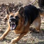 K9 Bodyguards: Versatile Home-Defense