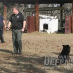 preparing your future K9 bodyguard to protect you.