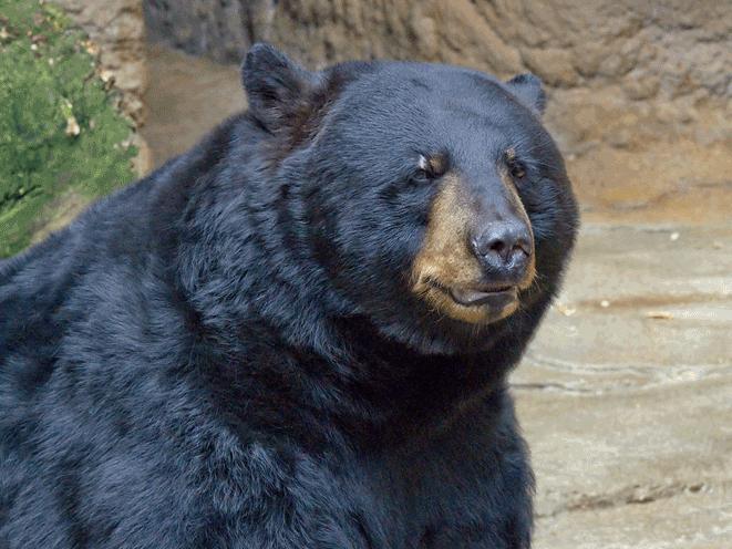 Florida Man Shoots Bear, florida shooting, florida bear