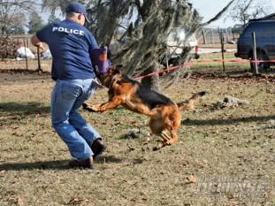 guard dog, guard dogs, dogs, dog, guard dog tips