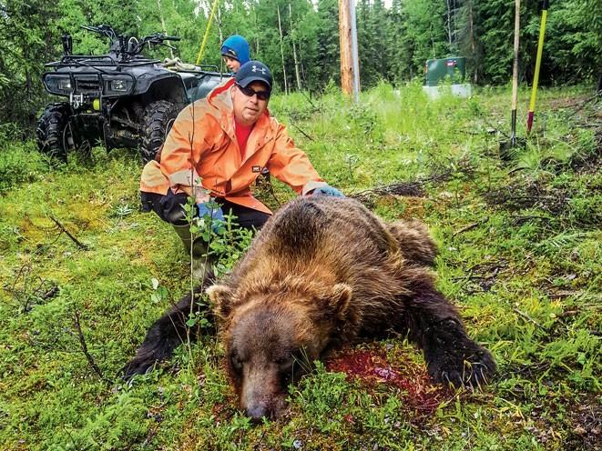 bear, animal, animal attacks, bear, bear attack