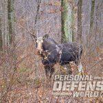 shooting, range, shooting range, shooting skills, moose hunting