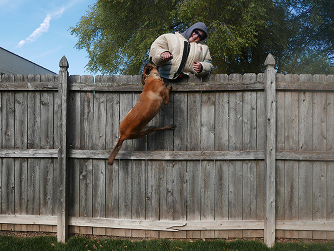 Personal Protection Dog fence