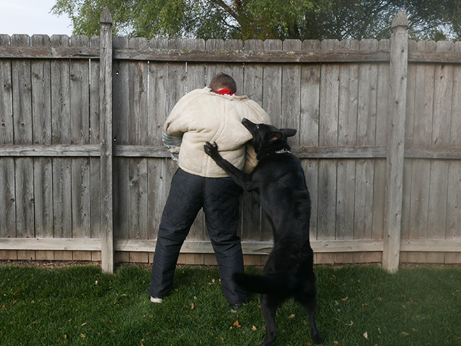 Personal Protection Dog intruder
