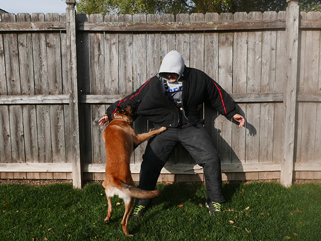 Personal Protection Dog attack
