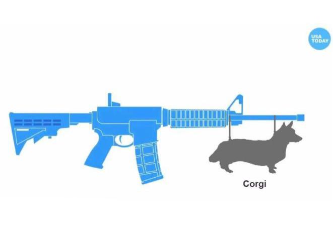 USA Today AR Bayonet Corgi