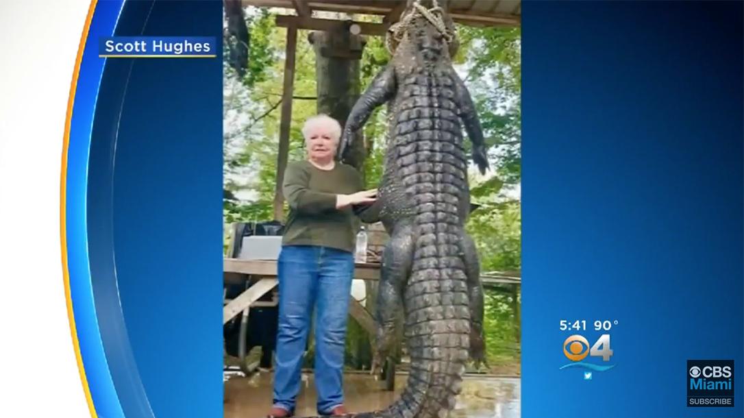 texas grandmother, texas grandmother alligator, judy cochran, judy cochran texas, judy cochran texas alligator